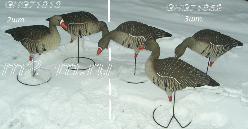 Гусь белолобый Pro-Grade Full Body Specklebelly Harvester Pack 71852 Manufacturer: Avery GreenHead Gear GHG Комплект из 6 полнокорпусных муляжей