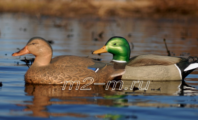 GreenHead Gear   Hot Buy  Standard  Mallards 70001