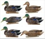 8062 Avian-X rjvgktrn полноразмерных чучел кряквы - Early Season Topflight Mallards